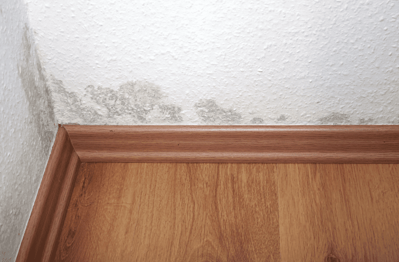How to Prevent Mold in the House